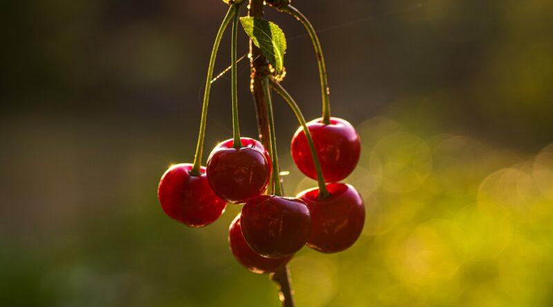 Gyümölcsfák permetezése: mikor és mivel kezeljük fáinkat?