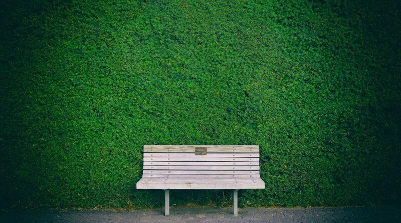 Sövénynyírás tippek: a csodasövény és a fagyal nyírása