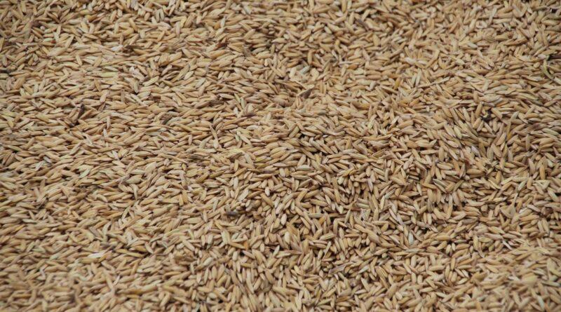 Milyen fűmagot érdemes venni: a jó fűmagkeverék választása talaj szerint