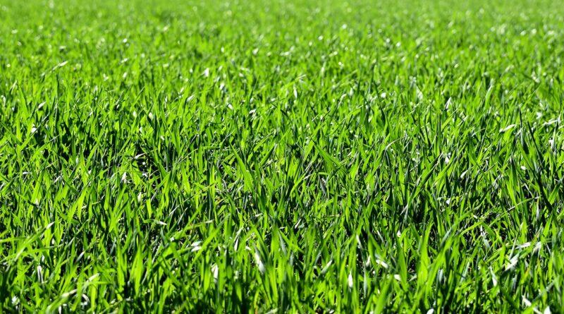 A talajlazítás előnyei: mitől lesz szép zöld a fű?